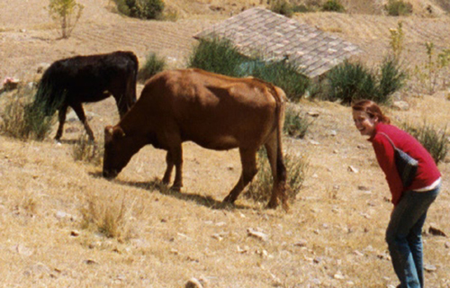 four-year reunion with bovine friends in Peru, August 2008